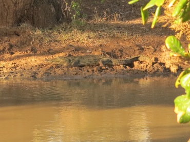 Crocodilo na beira do lago.