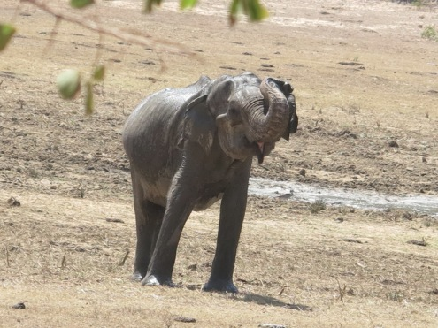 Elefante alegre.