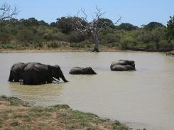 Elefantes na hora do banho.