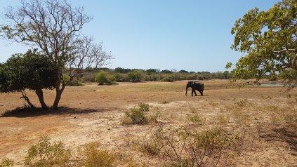 Elefante no parque.