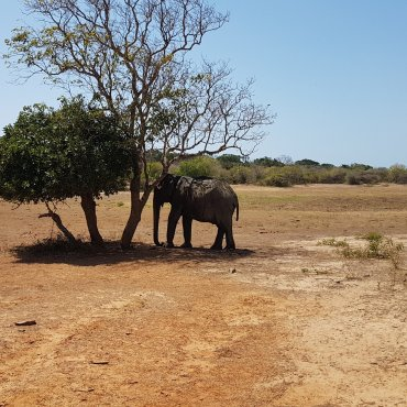 Elefante solitário.