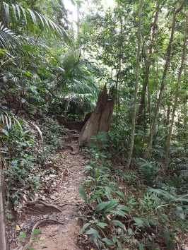 Parte seca na trilha em Taman Negara.